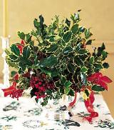christmas holly by Arrington Flowers, Your Rocky Mount, VA Florist