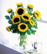 Sunflowers in a Vase by Arrington Flowers, Your Rocky Mount, VA Florist