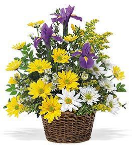 Iris & Daisy Basket by Arrington Flowers, Your Rocky Mount, VA Florist