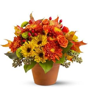 Sugar Maples by Arrington Flowers, Your Rocky Mount, VA Florist