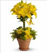 Yellow Fellow by Arrington Flowers, Your Rocky Mount, VA Florist