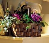 Mixed African Violet Basket by Arrington Flowers, Your Rocky Mount, VA Florist
